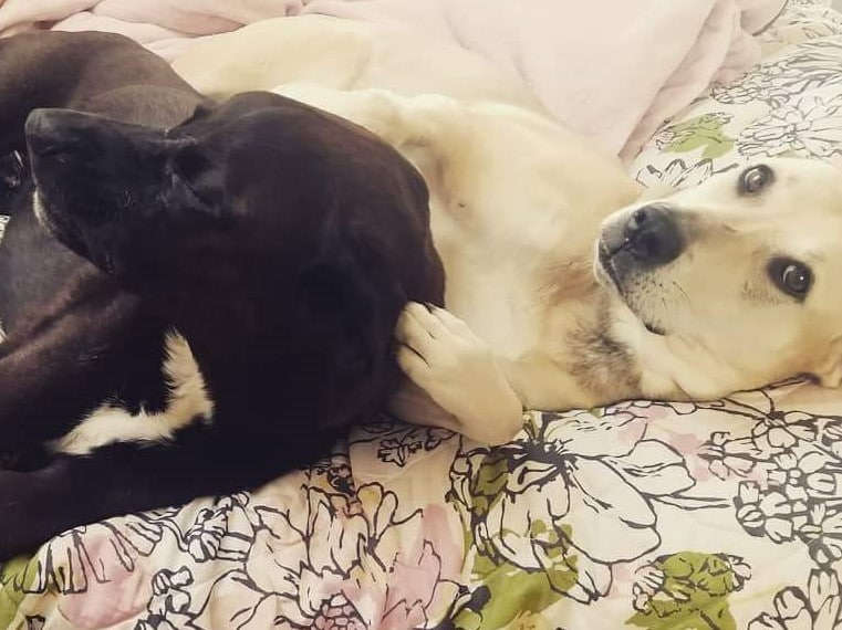 dogs snuggling on bed